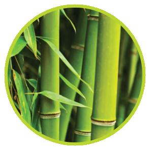 Rezerva Odorizant Bambus ⋆ Columbia Fresh ⋆ Odorizante Profesionale ⋆ Sistem Odorizare ⋆ Sistem Parfumare ⋆ Odorizant Camera ⋆ Odorizant Bubble Gum