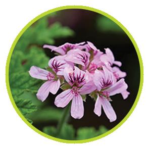 Rezerva Odorizant Citronella ⋆ Columbia Fresh ⋆ Odorizante Profesionale ⋆ Sistem Odorizare ⋆ Sistem Parfumare ⋆ Odorizant Camera ⋆ Odorizante pentru Birou