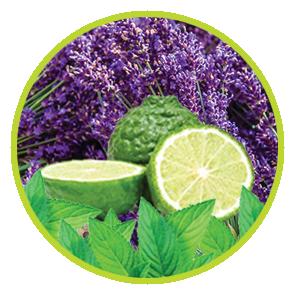 Rezerva Odorizant CKO - Lavanda, Bergamota si Menta ⋆ Columbia Fresh ⋆ Odorizante Profesionale ⋆ Sistem Parfumare ⋆ Odorizante pentru Birou