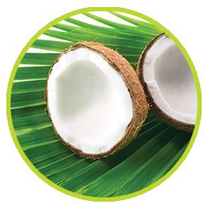 Rezerva Odorizant Cocos ⋆ Columbia Fresh ⋆ Odorizante Profesionale ⋆ Sistem Odorizare ⋆ Sistem Parfumare ⋆ Odorizant Camera ⋆ Odorizante pentru Birou