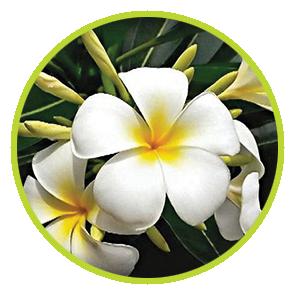 Rezervă odorizant Iasomie ⋆ Columbia Fresh ⋆ Odorizante Profesionale ⋆ Sistem Odorizare ⋆ Sistem Parfumare ⋆ Odorizant Camera ⋆ Odorizant Bubble Gum