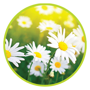 Rezervă odorizant Margarete ⋆ Flori Albe ⋆ Columbia Fresh ⋆ Odorizante Profesionale ⋆ Sistem Odorizare ⋆ Sistem Parfumare ⋆ Odorizant Camera