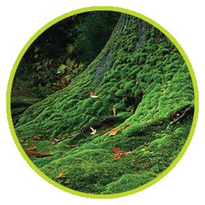 Rezerva Odorizant Muschi Verde ⋆ Columbia Fresh ⋆ Odorizante Profesionale ⋆ Sistem Odorizare ⋆ Sistem Parfumare ⋆ Odorizant Camera ⋆ Odorizant Bubble Gum