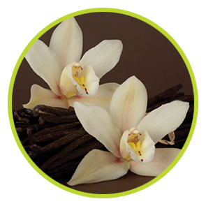 Rezervă odorizant Vanilie ⋆ Columbia Fresh ⋆ Odorizante Profesionale ⋆ Sistem Odorizare ⋆ Sistem Parfumare ⋆ Odorizant Camera ⋆ Odorizante pentru Birou