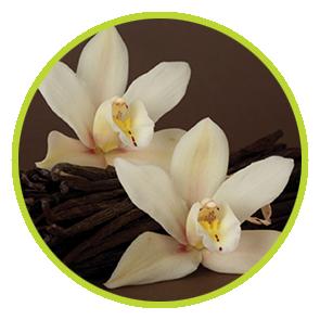 Rezerva Odorizant Vanilie ⋆ Columbia Fresh ⋆ Odorizante Profesionale ⋆ Sistem Odorizare ⋆ Sistem Parfumare ⋆ Odorizant Camera ⋆ Odorizante pentru Birou