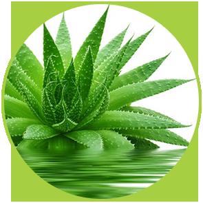 Rezervă Odorizant Aloe Vera ⋆ Aomă proaspată ce revitalizează spiritul și îl umple cu energie. Oferă relaxare psihică și înlătură stressul