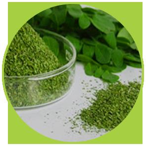 Odorizant 100% natural cu ulei esențial de Eucalipt ⋆ Premium Perfume ⋆ Columbia Fresh ⋆ Prospețimea naturii în locația ta!
