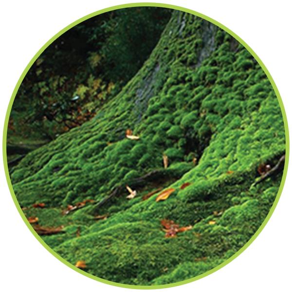 rezerva-odorizant-profesional-muschi-verde
